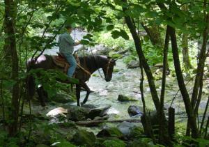 horse-crossing